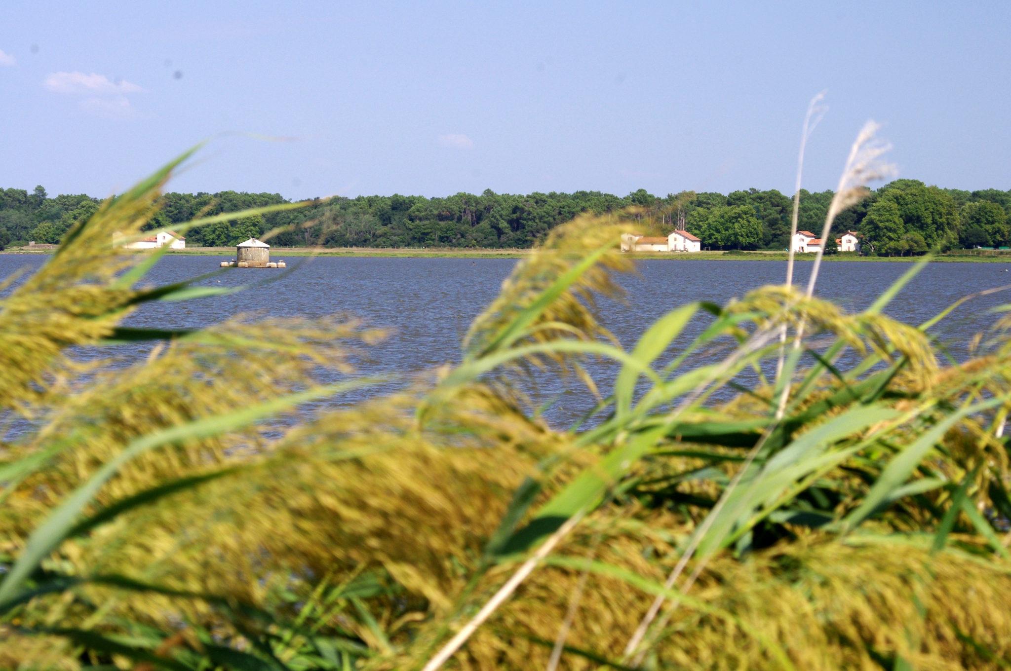 La Réserve Naturelle du Marais d'Orx