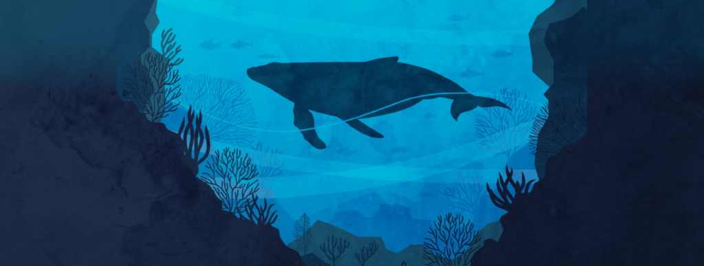 Conférence Rencontre avec les dauphins et baleines du Gouf