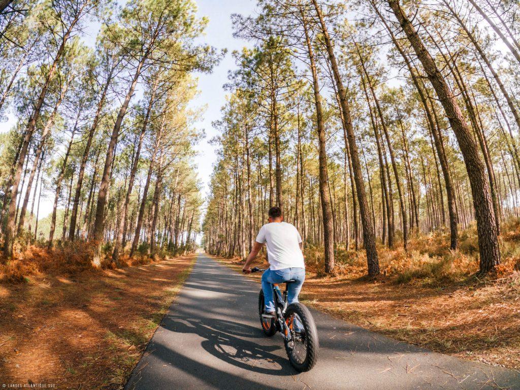 Balade à vélo sur une piste cyclable dans la forêt landaise