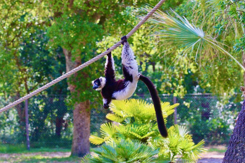 6.zoo-labenne-oti-LandesAtlantiquesud-Makivari