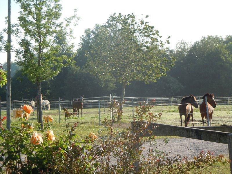 Ecole Equitation Le Menusé_St Jean de Marsacq_Landes Atlantique Sud (6)