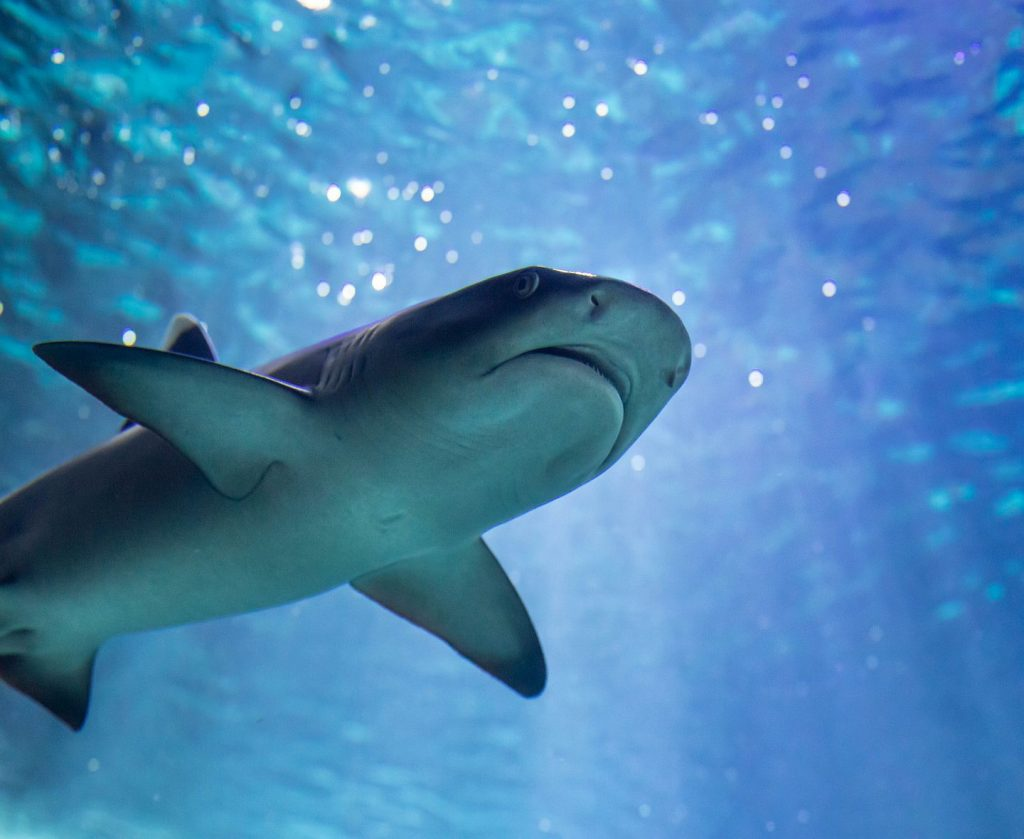 Requin Aquarium de Biarritz