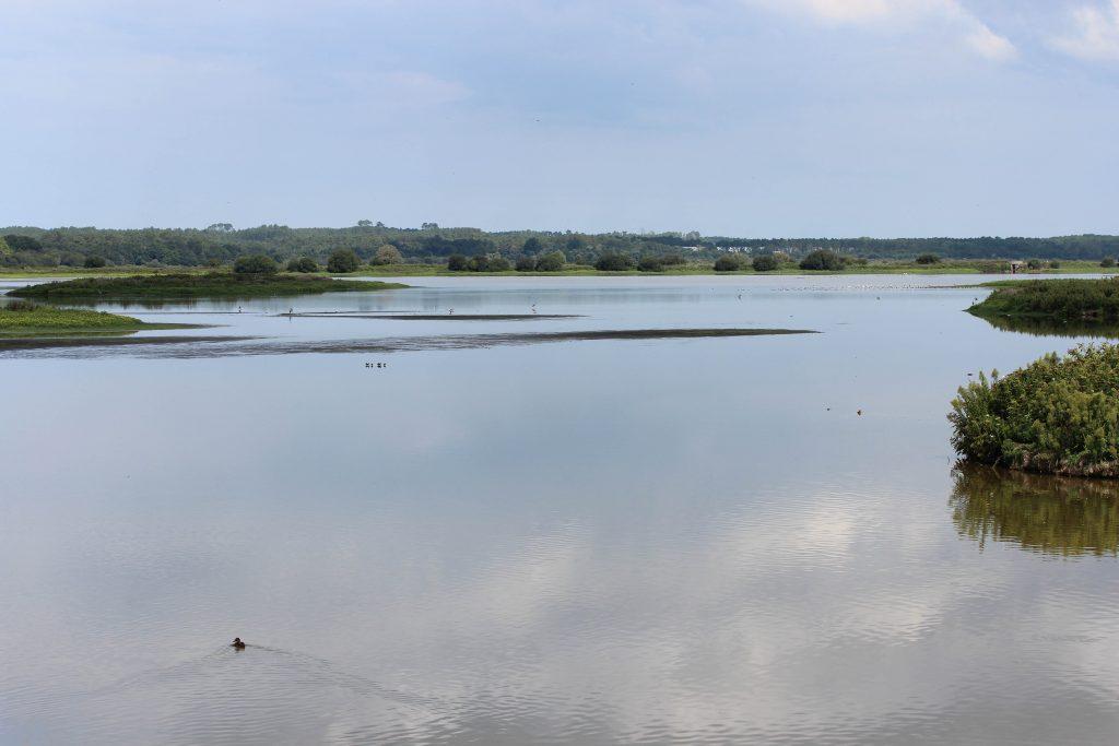 Marais-d-Orx–Magali-Montus