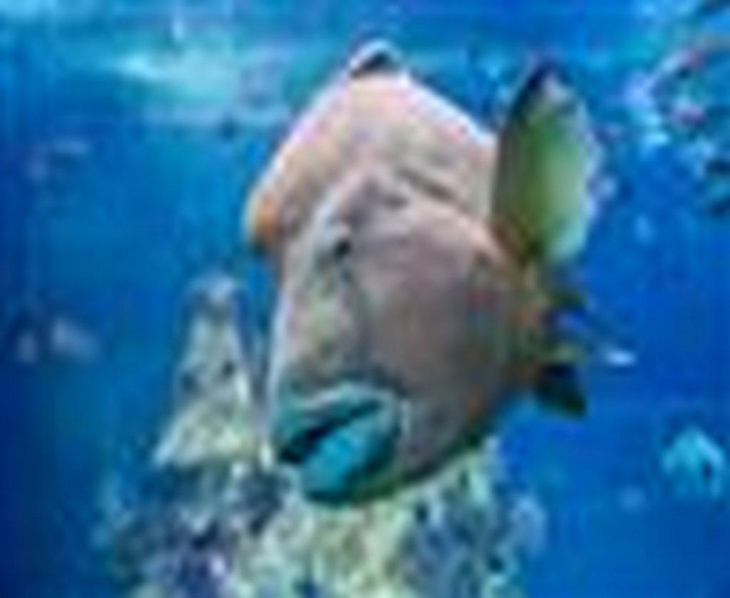 Napoleon-Aquarium-de-Biarritz-