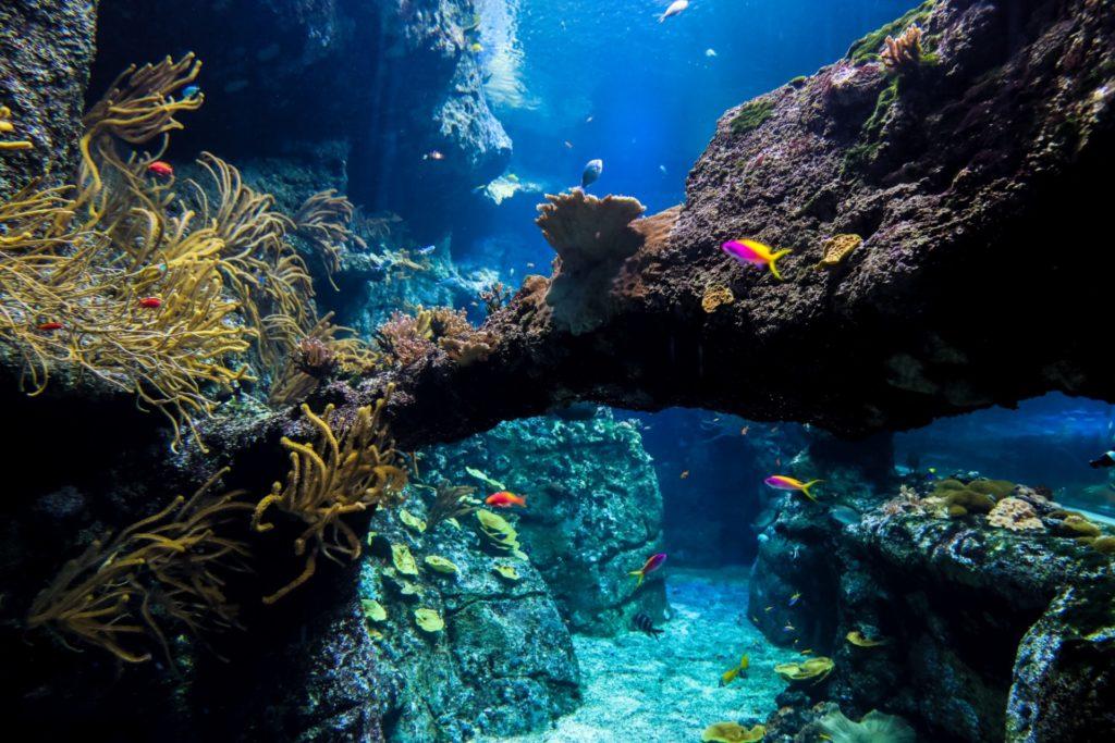 Récif corallien Aquarium de Biarritz