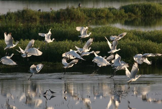 Réserve naturelle du Marais d'Orx
