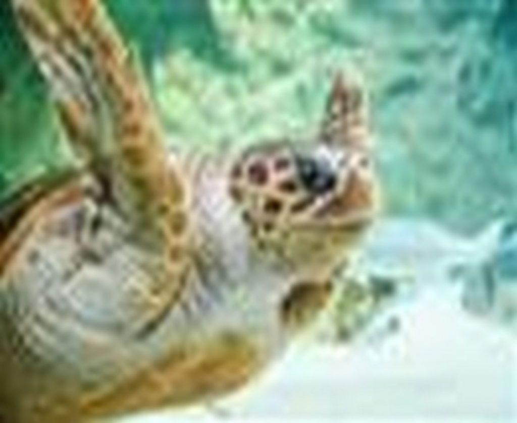 Tortue-Aquarium-de-Biarritz-