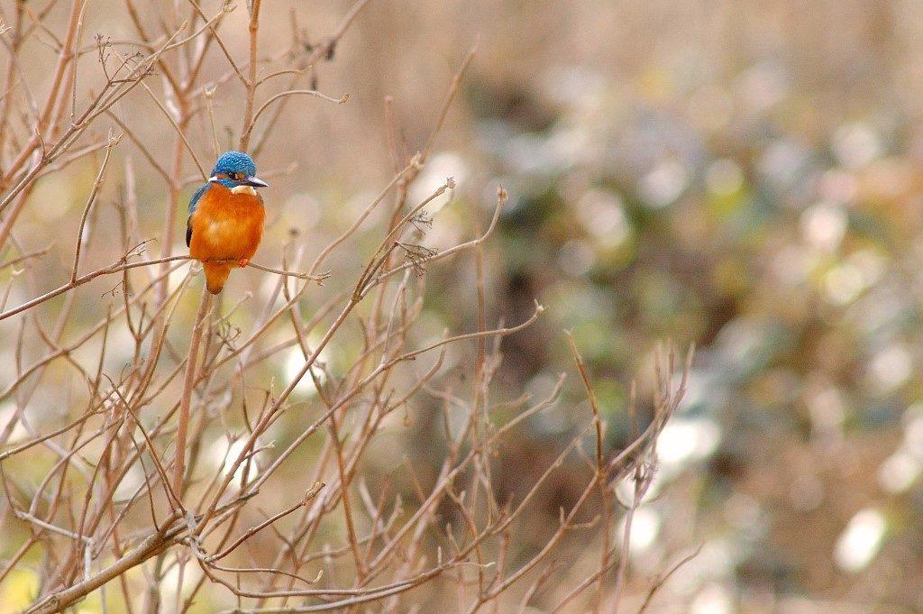 jerome-marti-noguerre-foret-nature-10