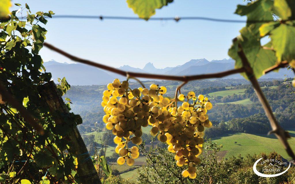 Cave des producteurs de Jurançon – Gan – Vignes